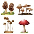 Stock Vector: Mushrooms