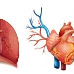 Heart organ — Stock Vector