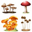 Different species of mushrooms — Stock Vector