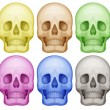 Colorful skulls — Stock Vector