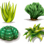 Постер, плакат: Aloe vera plants and cacti