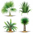 Palm plants — Stock Vector