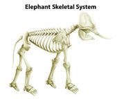 Skeletal System of an Elephant — Stock Vector