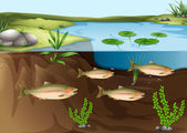 An ecosystem under the pond — Stock Vector