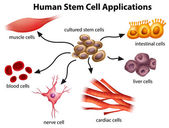 Human Stem Cell Applications — Stock vektor