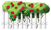 A fence with rose plants — Vector de stock