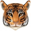 A head of a tiger — Stock Vector