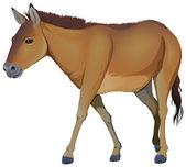 A brown horse — Stock Vector