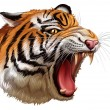 A head of a roaring tiger — Stock Vector #41535757