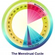 The Menstrual Cycle — Stock Vector