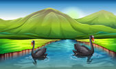Swans in the river — Stock Vector