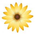 Постер, плакат: A flower with orange petals