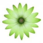 Постер, плакат: A flower with green petals