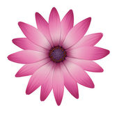 A flower with pink petals — Stock Vector