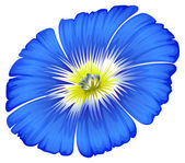 A blue blooming flower — Stock Vector