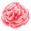 A carnation pink flower — Stock Vector #43023483