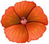 A blooming orange flower — Stock Vector
