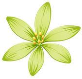 A green flower — Stock Vector