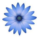 A multi-petal flower — Stock Vector