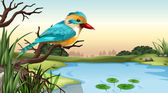 A river kingfisher — Stock Vector