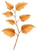 Brown leaves — Stock Vector
