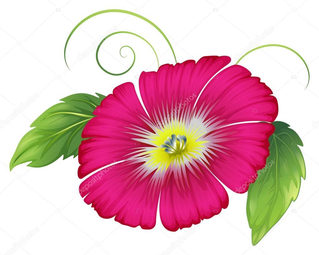 大的粉红色的康乃馨花 - 图库插图
