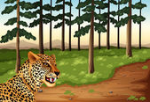 A leopard at the forest — Stock Vector