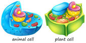 Animal and plant cells — Stock Vector