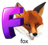 A letter F for fox — Stock Vector