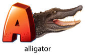 A letter A for alligator — Stock Vector