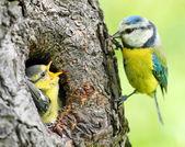 Vahşi doğada ebeveynlik. — Stok fotoğraf