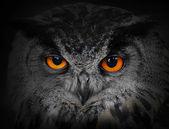 Os olhos do mal. — Foto Stock