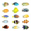 Tropical fish. — Stock Photo #12711170