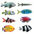 Tropical fish. - Stock Photo