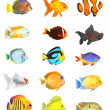 Tropical fish. — Stock Photo #12711172