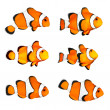 Stock Photo: Clownfish (Amphiprion ocellaris).