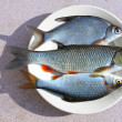 Fresh raw fish on a dish. - Stock Photo