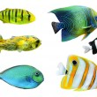 Stock Photo: Tropical fish.