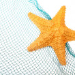 The caribbean starfish. — Stock Photo #12712750