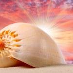 coquillages sur la plage et le magnifique coucher de soleil sur une mer tropicale — Photo #12712766