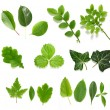 Green leaf collection on white background - Foto Stock