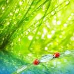 The Ladybugs. — Stock Photo