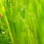 ������, ������: The Ladybug