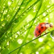 Stock Photo: Ladybug on fresh green leaf.