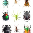 Stock Photo: Insect collection on white background