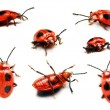Ladybird in different positions in front of a white background — Stock Photo