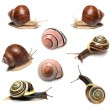 Royalty-Free Stock Photo: Snails collection on white background