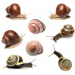 Stock Photo: Snails collection on white background