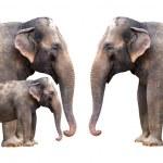 Elephants family - isolated — Stock Photo