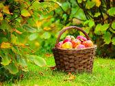 Manzanas rojas y amarillas. — Foto de Stock